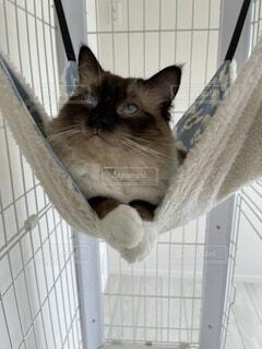 猫,動物,屋内,子猫,ネコ科,猫の家具
