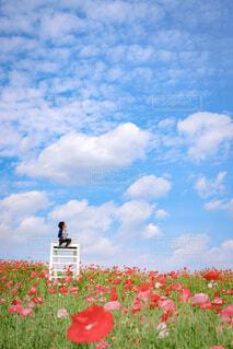 空,花,屋外,赤,雲,草,ポピー,映えスポット