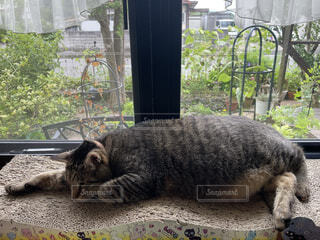 建物の上に横たわっている猫の写真・画像素材[4652553]
