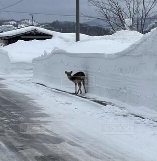 風景,冬,屋外,後姿,鹿,遭遇