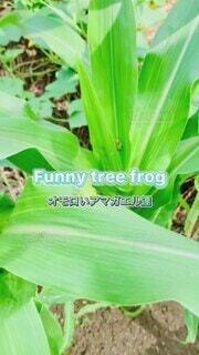 夏,緑,カエル,アマガエル,草木,緑色