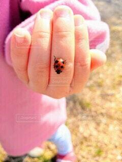 自然,動物,手,子供,女の子,指,人物,人,虫,テントウムシ,昆虫,生物,こども,幼児,てんとう虫,接写,こどもの手,持株