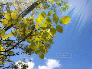 仰ぎ見る青空の写真・画像素材[4663776]