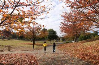公園の人々のグループの写真・画像素材[2174018]