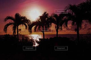 夕焼けとヤシの木の写真・画像素材[4645222]