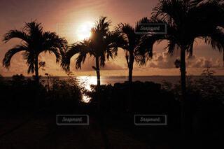 自然,風景,海,空,夕日,屋外,太陽,ビーチ,雲,夕焼け,夕暮れ,水面,沖縄,樹木,ヤシの木,日の出,波照間島,草木,パーム,設定,ペンション最南端