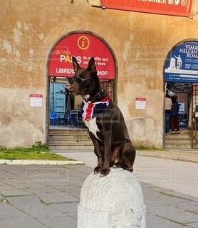 犬,イケメン,屋外,いぬ,イタリア,おすわり
