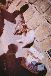 猫,動物,景色,レンガ,癒し,昼下がり