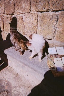 猫,動物,レンガ,癒し,昼下がり,石,戯れ