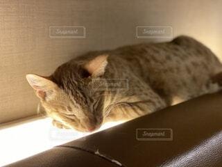 猫,動物,屋内,光,子猫,壁,お昼寝,暖,ネコ科
