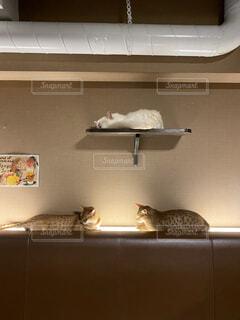 猫,動物,屋内,壁,三角形