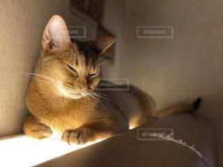 猫,動物,屋内,子猫,壁,ネコ科
