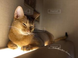 猫,動物,屋内,ライト,光,子猫,壁,座る,ネコ科
