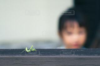 自然,風景,子供,少女,昆虫,カマキリ