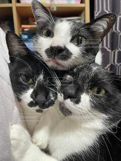 猫,動物,屋内,白,黒,景色,子猫,ネコ科