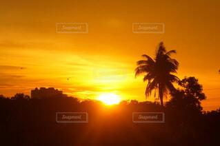 ヤシの木と夕日の写真・画像素材[4646930]