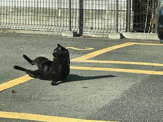 犬,動物,屋外,黒
