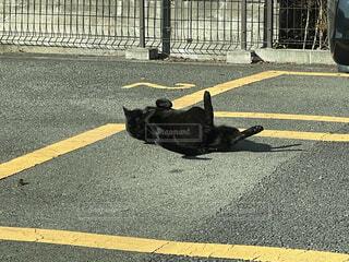 犬,屋外,黒,道路,景色,寝転ぶ,道,通り,シャドウ