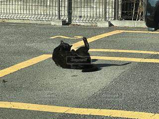 屋外,道路,道,歩道,通り,シャドウ