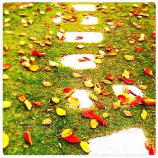 芝生の写真・画像素材[247666]