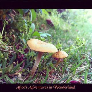 菌の写真・画像素材[247668]