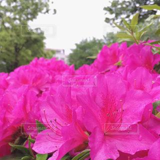 花の写真・画像素材[581583]