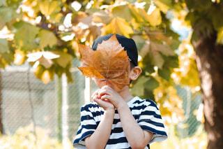 大きなかえでの葉をお面にしている子供の写真・画像素材[4832700]