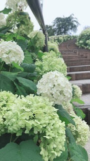 空,花,緑,階段,あじさい,野菜,紫陽花,曇り空,草木,ガーデン,フローラ,木木