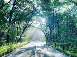 自然,空,森林,屋外,霧,草,樹木