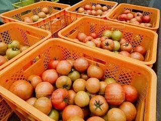 食べ物,風景,夏,緑,田舎,トマト,農業,農家,田舎の風景,夏の風景,田舎の暮らし,緑の暮らし