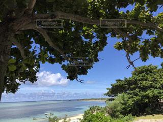 自然,風景,海,空,夏,雲,青,水面,沖縄,樹木,眺め