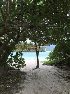 自然,風景,海,空,白,ビーチ,きれい,青,砂浜,水面,沖縄,樹木,川平湾,草木