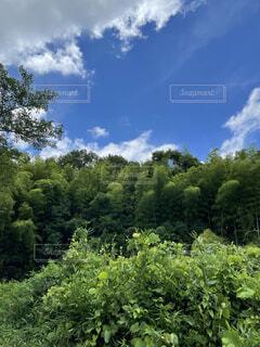 空と森の写真・画像素材[4649950]