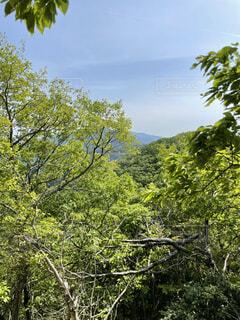 自然,風景,空,森林,屋外,雲,樹木,新緑,明るい,草木