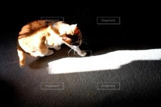 光と影と猫の写真・画像素材[4681288]