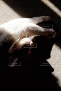 光と影と猫の写真・画像素材[4681968]