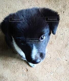 犬,動物,かわいい,黒,地面,子犬