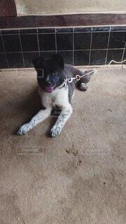 犬,動物,白,黒,景色,地面,子犬