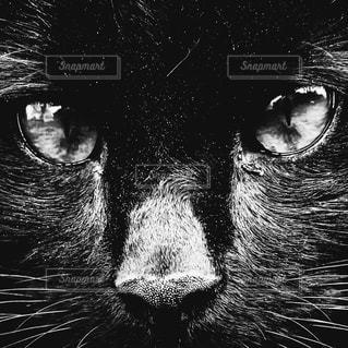 猫の写真・画像素材[207594]