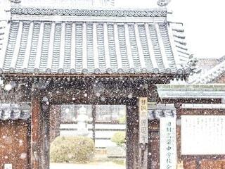 降りそそぐ雪の写真・画像素材[4681996]