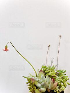 多肉植物の寄せ植えの写真・画像素材[4689741]