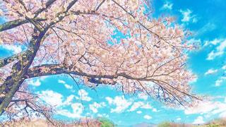 春,桜,卒業式