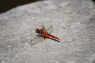 動物,昆虫,地面,カブトムシ,害虫,寄生虫