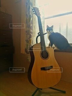猫,自然,アウトドア,動物,屋内,黄色,部屋,室内,窓,カーテン,ギター,光,楽器,音楽,昼,アコースティックギター