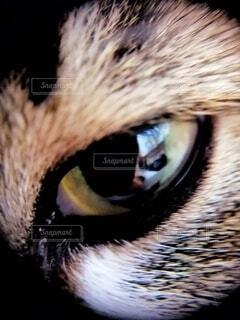 猫,自然,アウトドア,動物,黄色,暗い,顔,毛,目,瞳,毛皮,開く,黒目