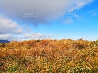 自然,風景,アウトドア,空,花,夏,秋,屋外,白,雲,青,黄色,山,景色,登山,草,雑草,快晴,草木