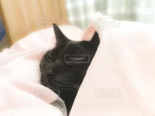 猫の写真・画像素材[242276]