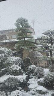 冬,雪,屋外,家,樹木,冷たい,3月,日中