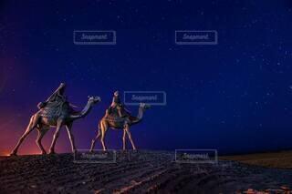 夜,屋外,ビーチ,月,ラクダ,月の沙漠