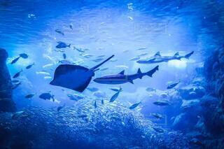 海の中の物語の写真・画像素材[4656502]